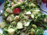 Radish sprout and apple salad
